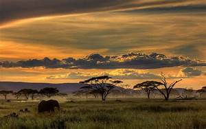 African Wallpaper - WallpaperSafari