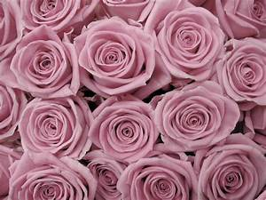 Rose Backgrounds - Wallpaper Cave