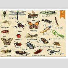Topic Insects  Cambly Content