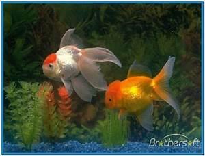 Real fish aquarium screensaver - Download free