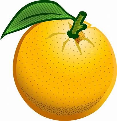 Orange Clipart Fruit Transparent Cartoon Oranges Cliparts