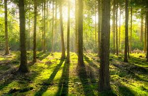 Understanding Random Forest  How The Algorithm Works And