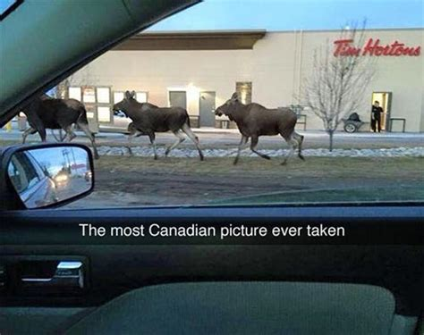 Canadian Moose Meme - just 22 of the best canadian memes smosh