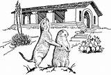 Prairie Dogs Children Coloring Dog Example Supply Tpwd Tx State sketch template