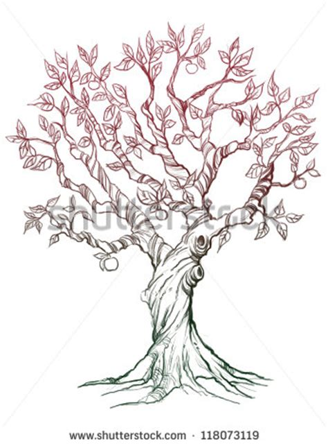 apple tree with roots drawing apple tree drawing stock images royalty free images