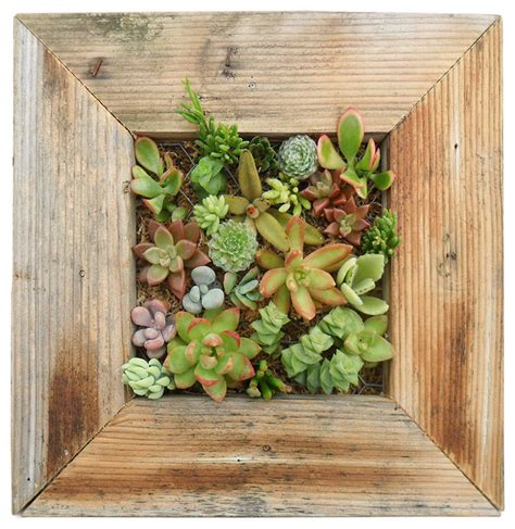 succulent living wall planter kit contemporary indoor