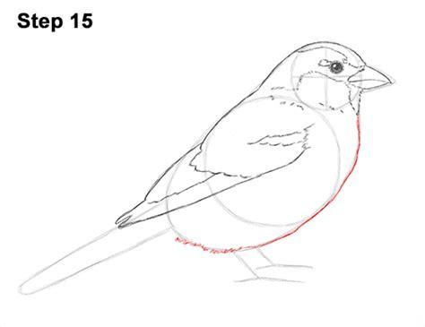 draw  sparrow