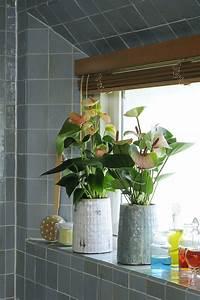 Anthurie Im Wasser : anthurium anthuriuminfo anthurium interieur pinterest gardens ~ Yasmunasinghe.com Haus und Dekorationen