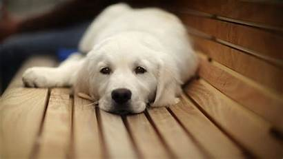 Puppy Dogs Hiccups Today Normal Dog Them