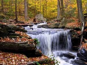 forest waterfall in autumn rocks fallen leaves hd