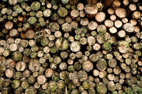 deforestation pictures  stock