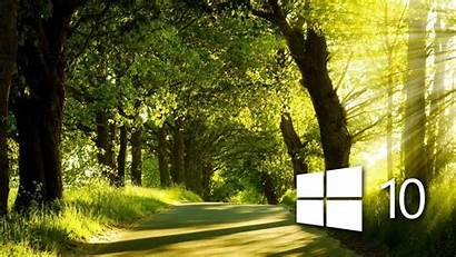 Windows Forest Sunny Wallpapers Flower Nature Computer
