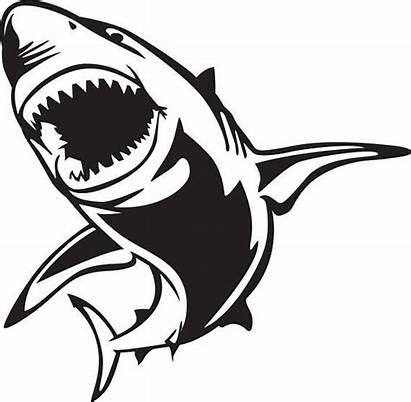 Shark Svg Silhouette Cricut Clip Clipart Drawing
