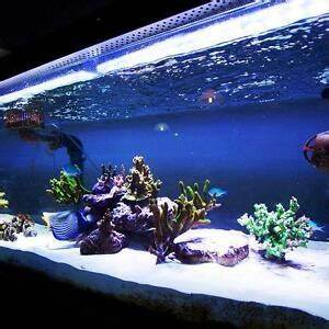 Aquarium Set Led : blue led 50cm 100cm strip bar aquarium set fish tank ~ Watch28wear.com Haus und Dekorationen