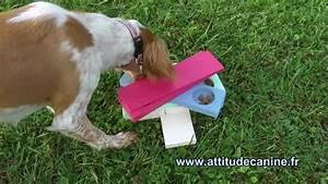 Video Pour Chien : jeux d 39 intelligence pour chien youtube ~ Medecine-chirurgie-esthetiques.com Avis de Voitures