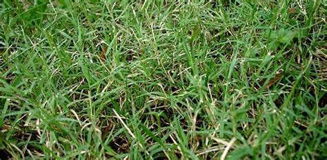 How to Control Bermuda Grass   Today's Homeowner