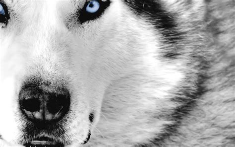 app cool animal wallpapers apk  windows phone android