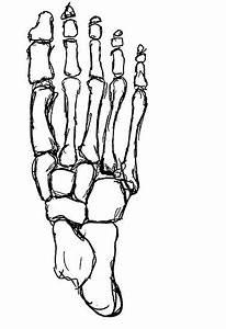 Foot Skeleton Drawing