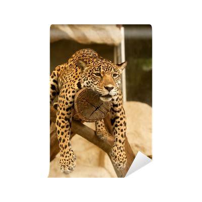 Fliesenaufkleber Leopard by Fototapete Leopard Tiger Pixers 174 Wir Leben Um Zu