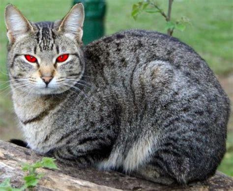 emberclan warrior cat clans wiki powered by wikia