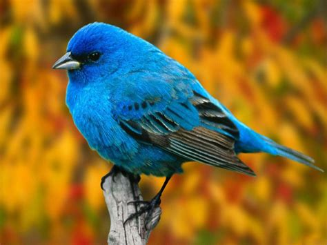 what are some symbol meanings of bird