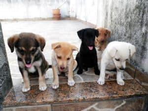 hundeerziehung mit  grossen ratgeber tipps hundeo
