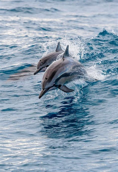 Pin By Joanne Labny On Dolphins Dolphins Whale Baby