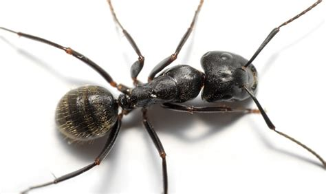 ant service ant inspections service to stop ants invading home