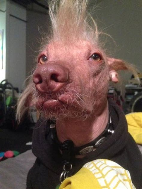 ugliest dogs   world  research lab