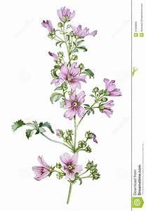 Wild flower stock illustration. Illustration of watercolor ...