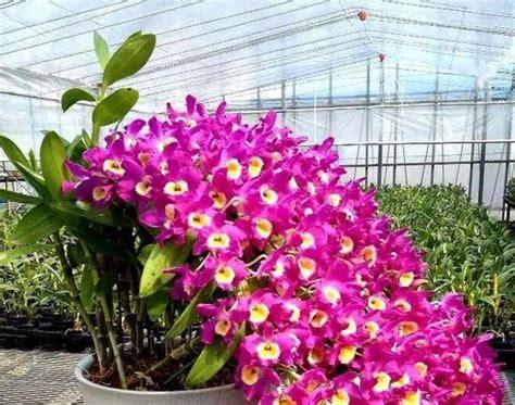 bunga anggrek toko bunga