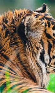 #2620316 / 3840x2528 tiger 4k hd wallpaper for macbook pro