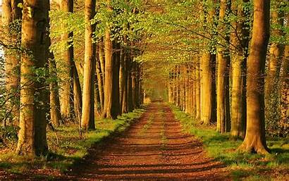 Peaceful Nature Trees Landscapes Roads Wallpapers Parks