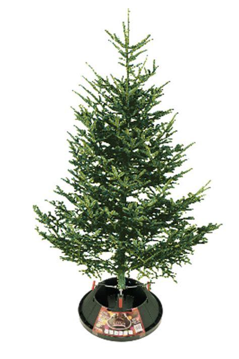 douglas fir christmas tree care trees archives indian creek nursery and garden center