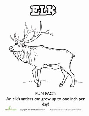facts about elk coloring page education 460 | elk coloring page animals kindergarten