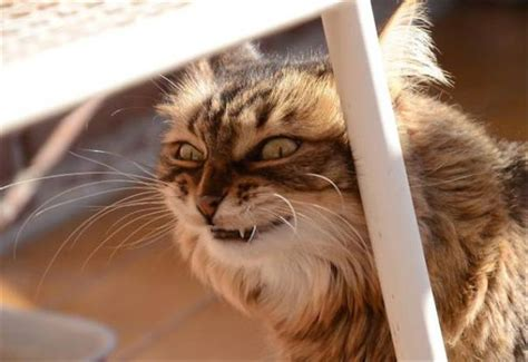 evil cats animals proof pure funny even