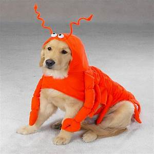 cute large dog halloween costumes for girl dogs dog beds With cute big dog beds