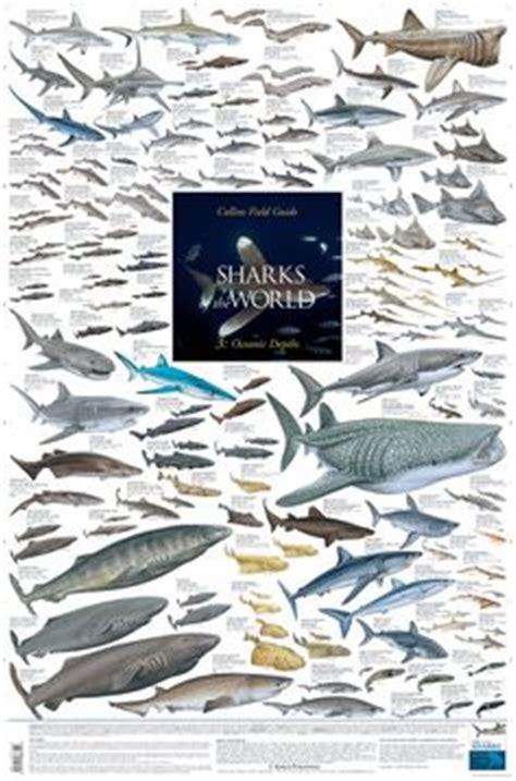 fish identification images   marine