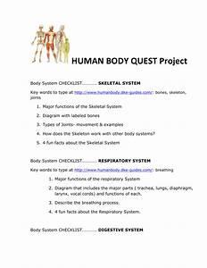 Human Body Skeleton Diagram Labeled