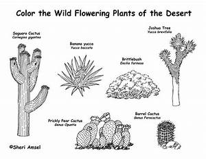 desert plants great for dioramas books projects With wiringpi non root