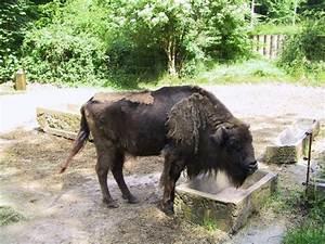 Tierpark Bad Mergentheim : tierpark bad mergentheim bild von wildpark bad mergentheim bad mergentheim tripadvisor ~ Eleganceandgraceweddings.com Haus und Dekorationen