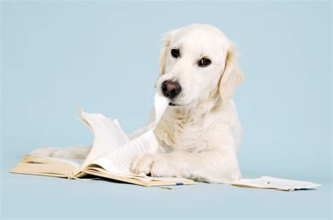 dog ate  home work pets   workers