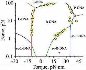Dna Phase Diagram  Solid Curves Indicate Transition