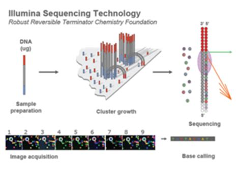 Illumina Sequencing Protocol by Biomicrocenter Sequencing Openwetware