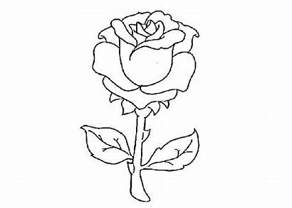 Coloring Rose Pages Roses Printable Drawing Heart