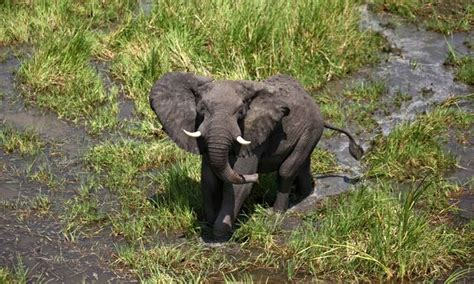 Ministry of Wildlife Conservation and Tourism (South Sudan)