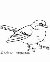 Bird Coloring Pages Birds Robin Printable Drawing Cool Forest Parrot Getdrawings Getcolorings Teacher Getcoloringpages Da Woodland Drawings Printables Adults Hidden sketch template
