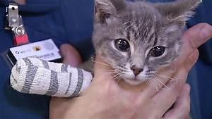 Veterinarian helps 500 animals hurt in Northern California ...