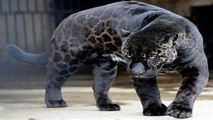 Rare Animals In The World Pictures to Pin on Pinterest ...
