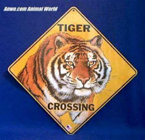 tiger crossing sign  animal world